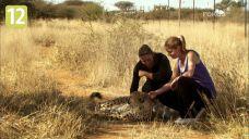 Dom dla gepardów