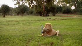 Niezniszczalni, odc. 8: W paszczy lwa