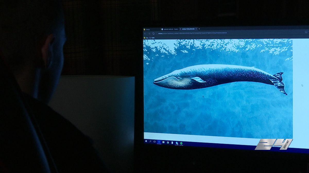 Nastolatek z Gliwic ofiarą gry Niebieski wieloryb