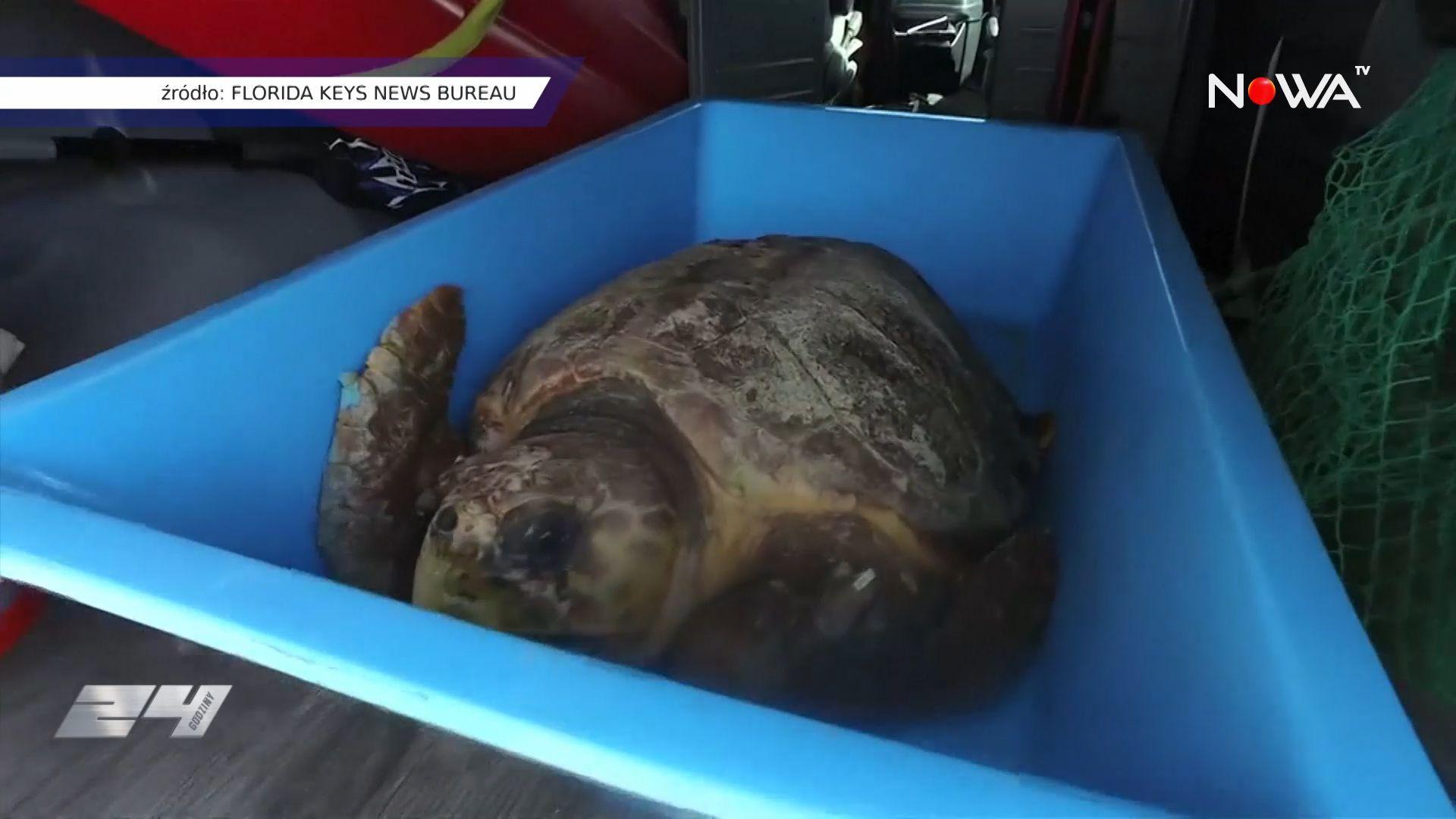 Na Florydzie świętowano Światowy Dzień Żółwia