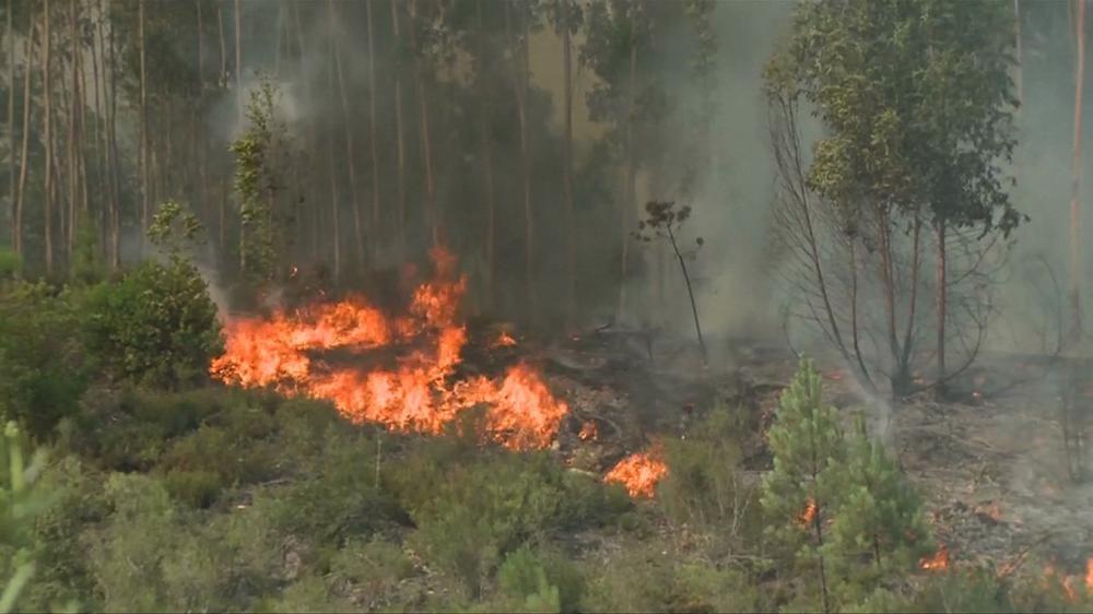 Tragiczny bilans pożarów w Portugalii – jest wielu zabitych