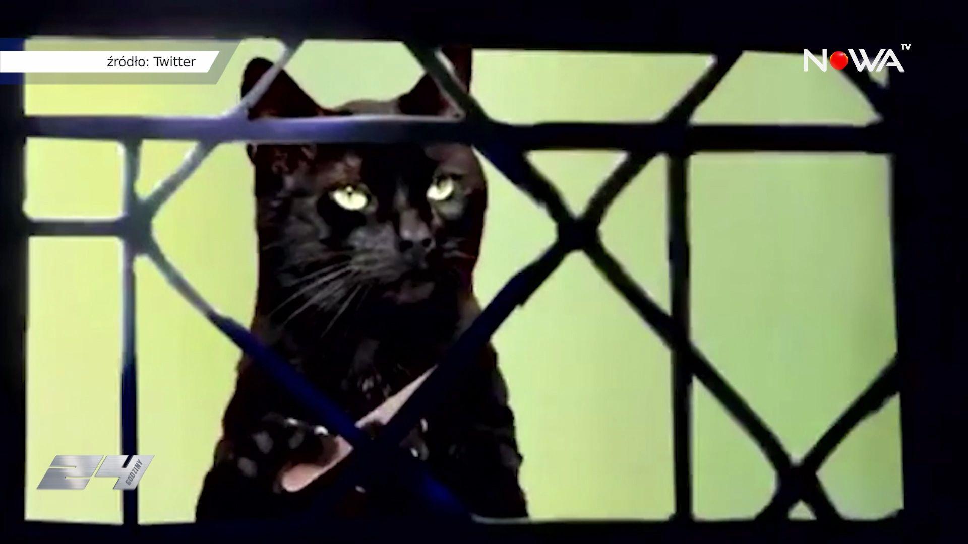 Kot prezesa nieoczekiwaną gwiazdą protestów