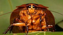 Pojedynki owadów