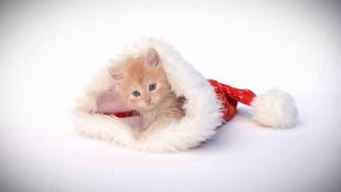 Święta w Eska TV: w Wigilię zwierzęta mówią ludzkim głosem, a my…? Specjalnie dla Was zamieniamy się rolami!