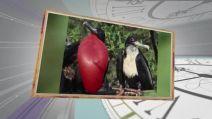 10 marca – kalendarium Wehikuł czasu. Odkrycie Wysp Galapagos, Dzień Spódnicy i....