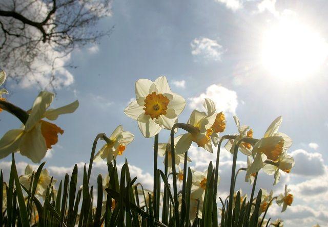 Pogoda: wiosna 2017 - kiedy będzie ciepło? Długoterminowa prognoza pogody