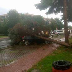 Burza w Rzeszowie wyrządziła liczne szkody [ZDJĘCIA]