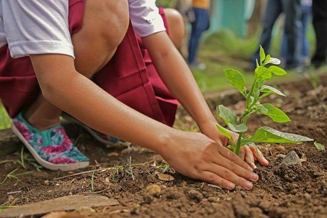 Zdjęcie z artykułu: Gorzów sadzi drzewa na Dzień Wiosny!