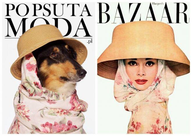Zdjęcie z artykułu: Psy jak modelki z okładek Vogue'a? Zobacz odważną akcję i brawurowe psiaki! [ZDJĘCIA]