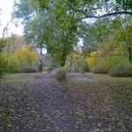 Zielona jesień w bydgoskim parku [ZDJĘCIE DNIA]