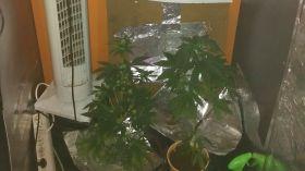 Nastolatek hodował konopie indyjskie w... swoim pokoju w szafie