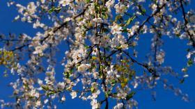 W oczekiwaniu na wiosenną pogodę [ZDJĘCIE DNIA]