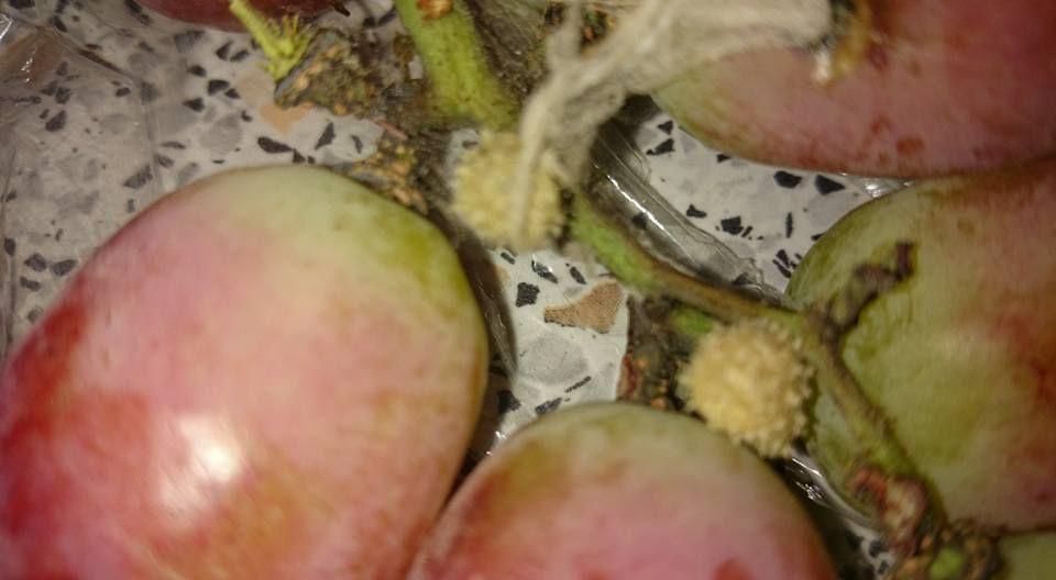 Kokony pająka w winogronach
