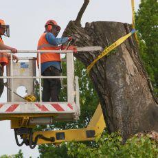 Baobab został wycięty! Koniec pewnej ery w dziejach Lublina [ZDJĘCIA]