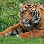 Zoo w Łodzi: W niedzielę Dzień Wielkich Kotów