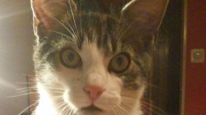 Kot, który jeździ autobusami. Szuka go wrocławskie MPK
