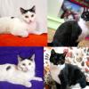 Białystok: Koty do adopcji. Te zwierzaki czekają na nowy dom! [GALERIA]