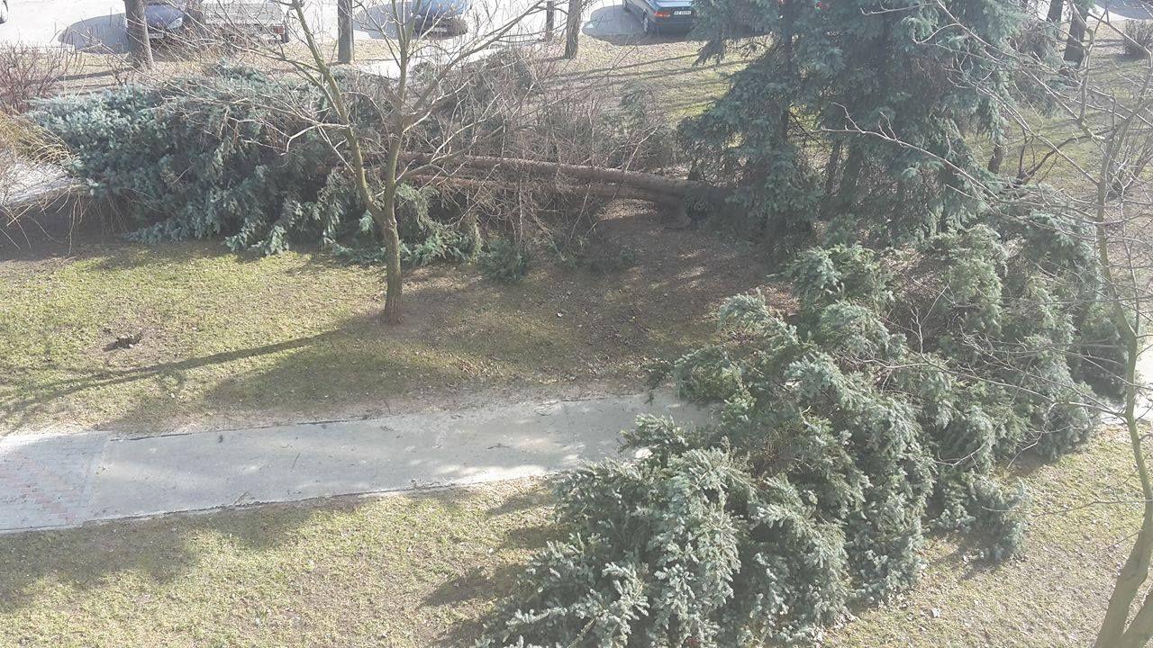 Drzewa w Rzeszowie przewracają się jak zapałki