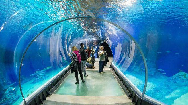 W Rzeszowie ma powstać oceanarium. Podobne do tego we Wrocławiu [WIDEO]