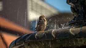 Wróbel w białostockiej fontannie [ZDJĘCIE DNIA]