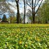 Wiosna w parkach [ZDJĘCIE DNIA]
