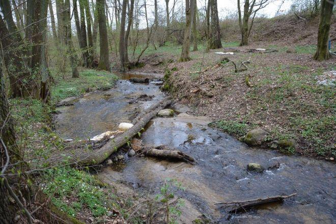 Zdjęcie z artykułu: Weź kalosze i przyłącz się do sprzątania rzeki Srebrnej w Gorzowie [AUDIO]