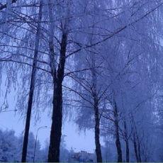 Białe drzewa [ZDJĘCIE DNIA]