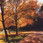 Złota jesień w mieście