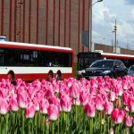 KZK GOP: Jak jeżdżą autobusy w wakacje? Będą dodatkowe linie!