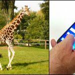 Koniec kolejek do łódzkiego zoo? Bilet można kupić przez internet i aplikację!