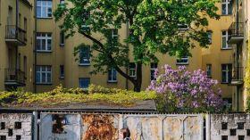 Drzewo na Krakowskiej