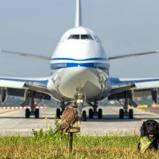 Lotnisko w Balicach [ZDJĘCIE DNIA]
