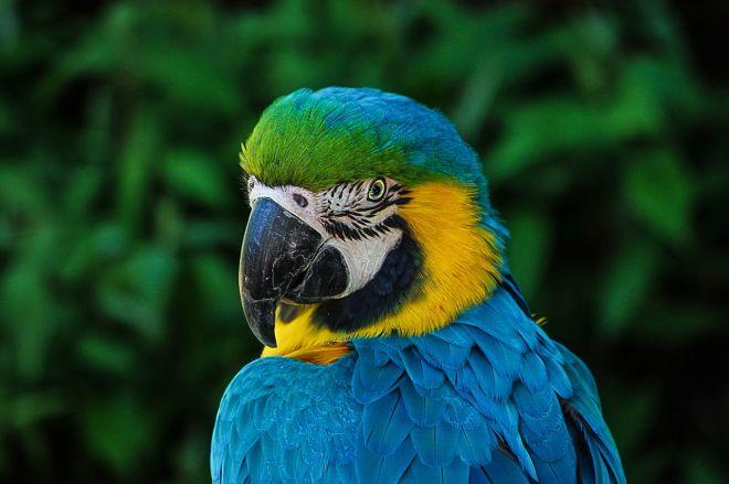 Zdjęcie z artykułu: Papugarnia w Bydgoszczy: 80 kolorowych ptaków do podziwiania [WIDEO NOWA TV 24 GODZINY]