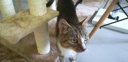 W tej kawiarni towarzystwa klientom dotrzymują... koty! Można je też adoptować [ZDJĘCIA]
