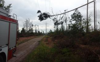 Pomorskie: Powalone drzewa, uszkodzone budynki i sieci energetyczne! Ponad 200 interwencji strażaków [ZDJĘCIA]