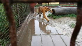 """Woda zalewa zwierzęta w hodowli pod Śremem! Dyrekcja ZOO szuka pomocy! """"Zostaliśmy sami"""""""