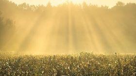 Złota leśna polana [ZDJĘCIE DNIA]