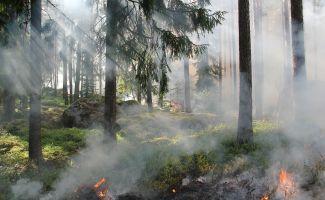 Pożar lasu pod Bydgoszczą. Z ogniem walczy kilka zastępów straży pożarnej!