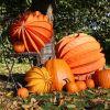 Jesień w Lublinie [PORADNIK] Co robić w mieście, ogrodzie i domu?