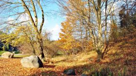Wspomnienie pięknej jesieni [ZDJĘCIE DNIA]