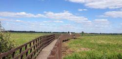 Miejsce na spacer blisko Białegostoku - kładka między Waniewem i Śliwnem w Narwiańskim Parku Narodowym [ZDJĘCIA]