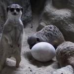 """TOP 8: Najśmieszniejsze zwierzaki w śląskim zoo. Te ZDJĘCIA Was rozbawią"""""""