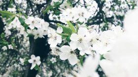 Wiosny nigdy dość!