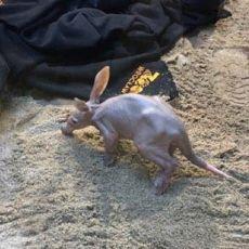 Sensacja we wrocławskim zoo! Maluch, który się tam urodził to rzadkość na skalę świata [WIDEO, ZDJĘCIA]