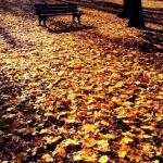 Dywan liści w parku Wieniawskiego