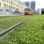 Zielone torowiska tramwajowe. Ranking miast
