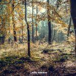 Jesień w lesie [ZDJĘCIE DNIA]