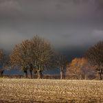 Skutki burz na Podkarpaciu - wiatr łamał drzewa i uszkadzał domy