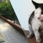 Szok! Wyrzucili kota razem z kuwetą przez okno!