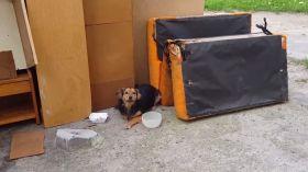 Łódź: Wierna suczka czekała na właściciela pod blokiem na Zgierskiej przy łóżku ze spalonego mieszkania [WIDEO]